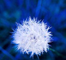 Winter 1 by Matt Stewart