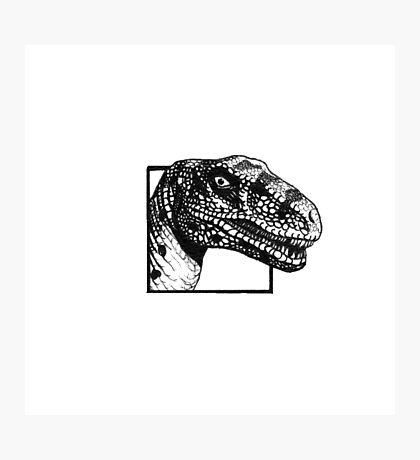 Spotted Raptor Photographic Print