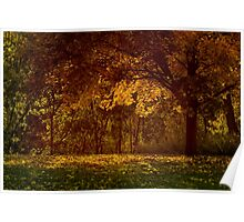Fall Tree Poster