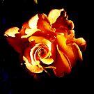 Spiral of an Orange Rose by karolina