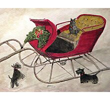 Hoping For A Sleigh Ride Photographic Print