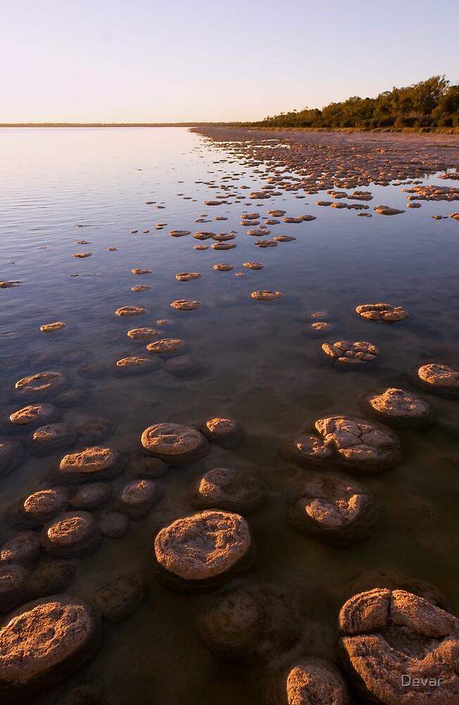 Thrombolites of Lake Clifton by Devar