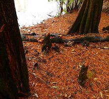 Fallen Cypress Leaves by WildestArt