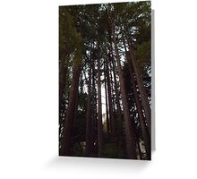 Tall Towering Redwoods Greeting Card