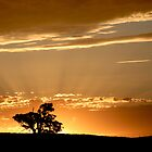 Last Rays - Nairne - Adelaide Hills by Leeo