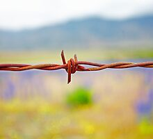 Barbed Wire Beauty by Neil