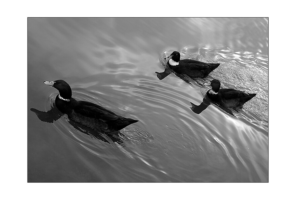 Swimming in silver. by Melinda Kerr
