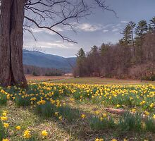 Smoky Mountain Revival by James Hoffman