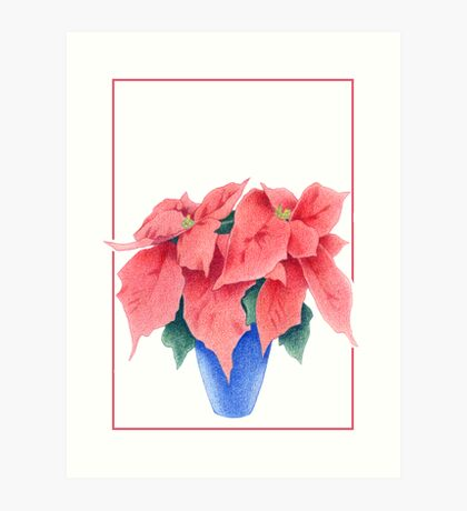 Poinsettia 2 Art Print