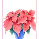 Poinsettia 2 by mrana