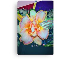 Day lily splendor Canvas Print