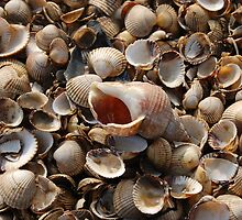 Whitstable shells by jonrye