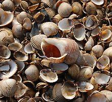 Whitstable shells by jonrye