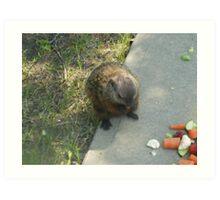 male groundhog Art Print