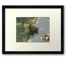 male groundhog Framed Print
