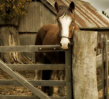 The Farmyard by Natalie Manuel