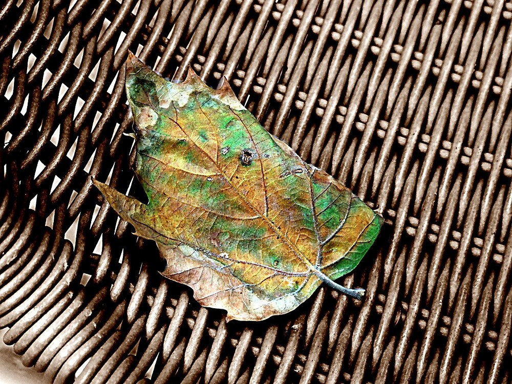 leaf by archibald