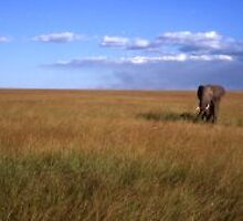 Elephant In Kenya by Afzal Ansary FRPS