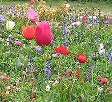 Le Ander Gardens, Bermagui, NSW, Australia by brendak