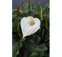 Lillies of the Valley Photographic Print