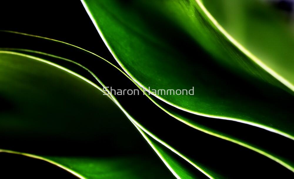 Leafy Stack by Sharon Hammond