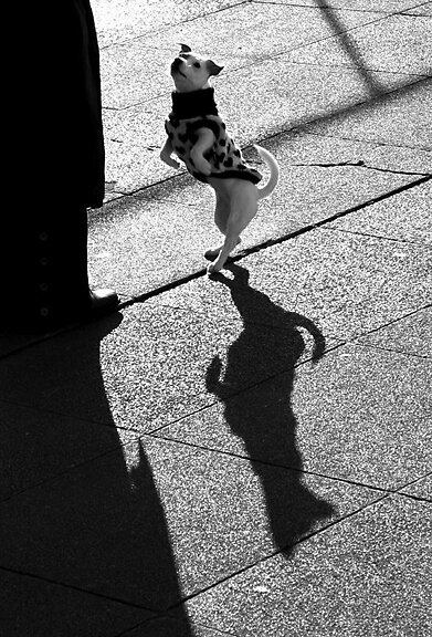 Walk the Line by Lewis Packman