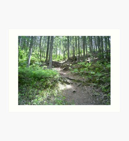 dense forests Art Print