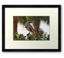 Mockingbird ~ Lady in Waiting Framed Print