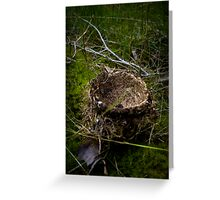 Empty Nest Greeting Card