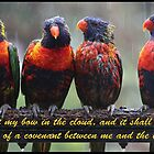 Genesis 9:13 with Lorikeets by JLOPhotography