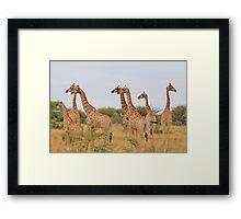 Giraffe Humor - African Wildlife - Amazing Stare Framed Print