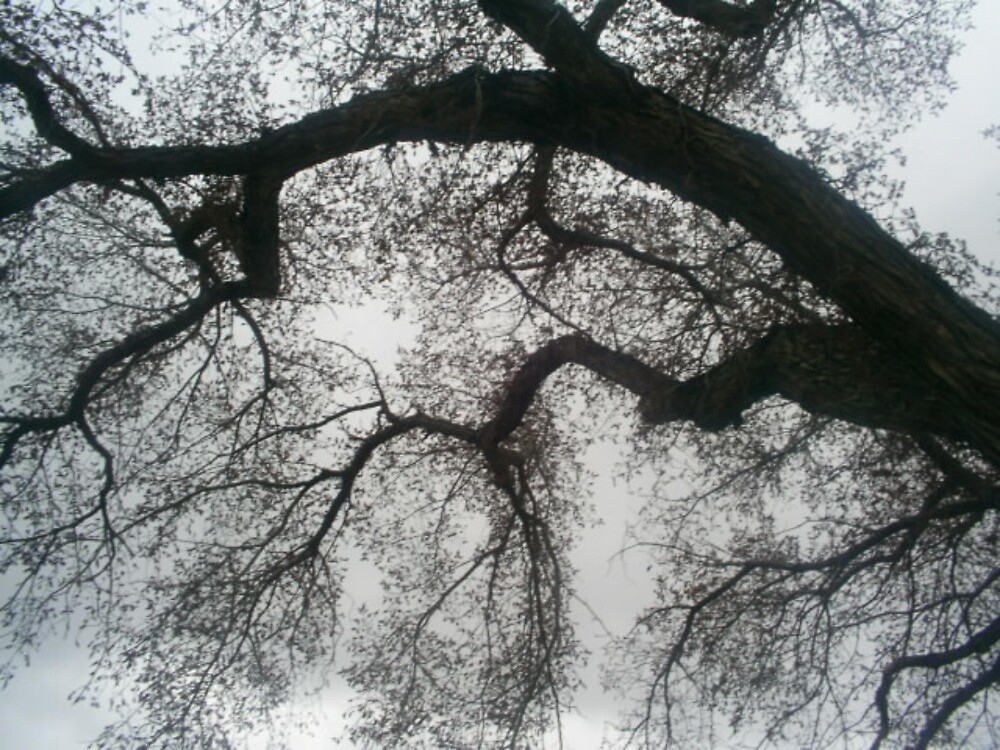 tree branches by oilersfan11