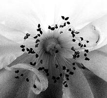 Snow White by HummingbirdLane