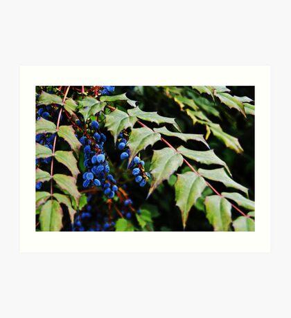 Black Berry Art Print