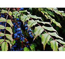 Black Berry Photographic Print