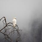 Cockatoo in the Mist by Joel Bramley