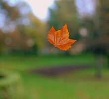 Fall! by munsterphotography