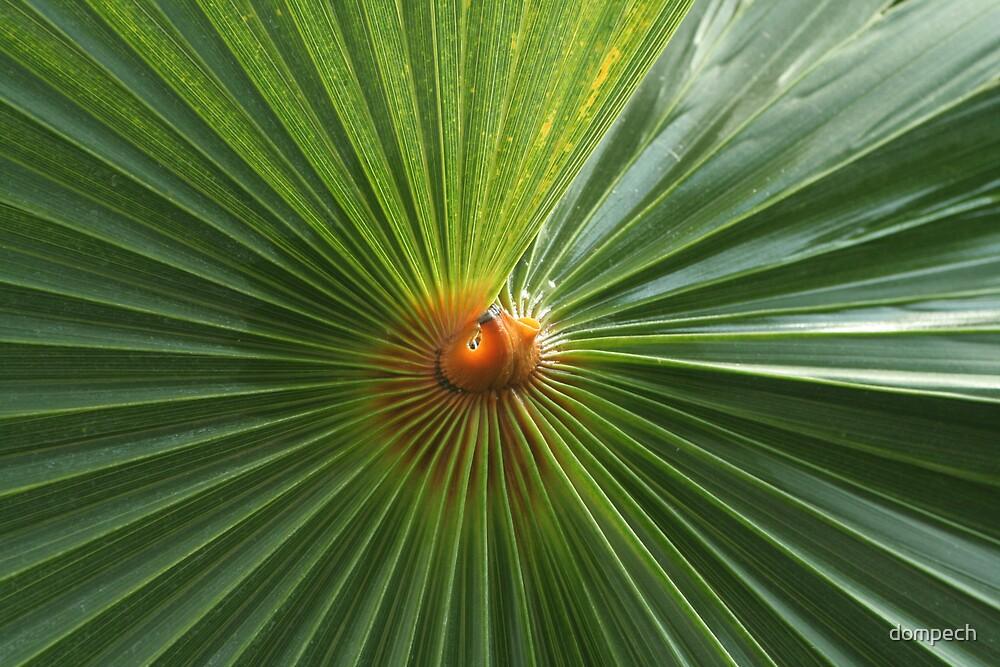 Palm centre by dompech