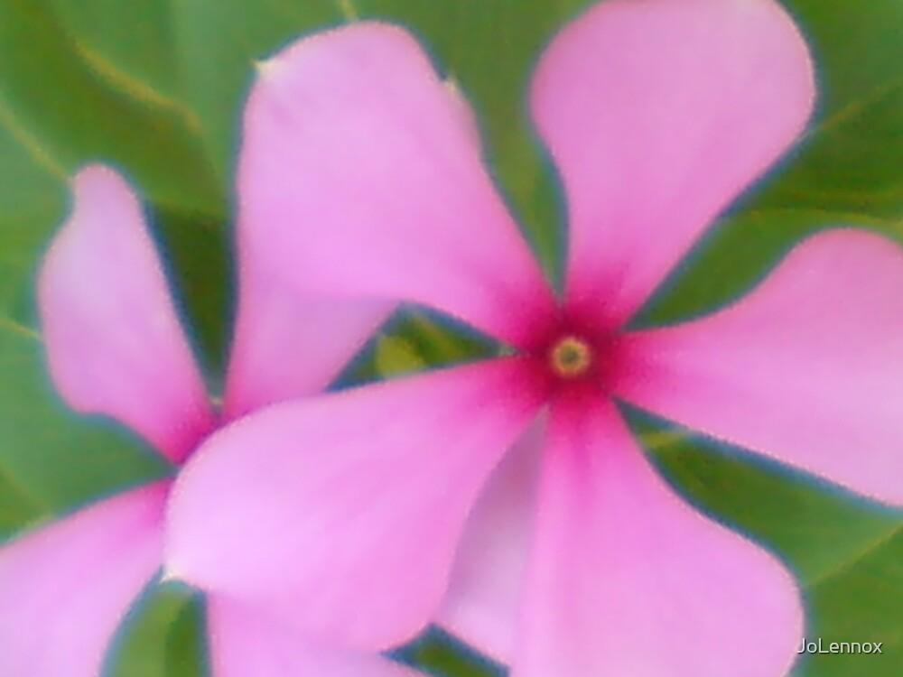 Pink Flower by JoLennox