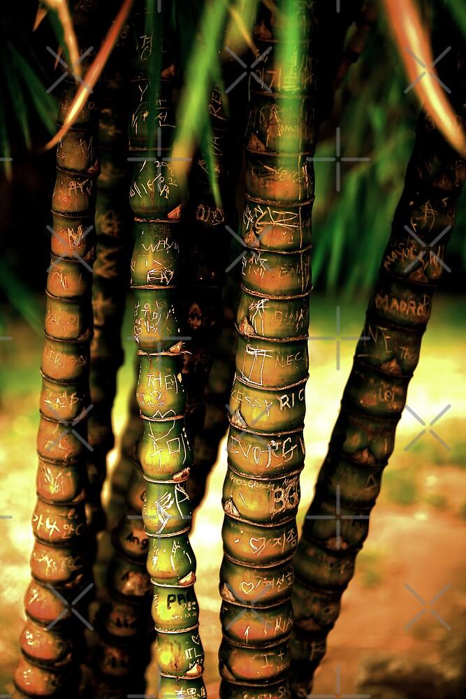 Bamboo Graffiti by Ben Pacificar