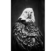 American Eagle Photographic Print