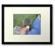 baby groundhog Framed Print
