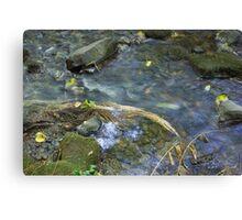 Renfrew Ravine - grass jam Canvas Print