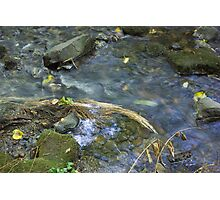 Renfrew Ravine - grass jam Photographic Print