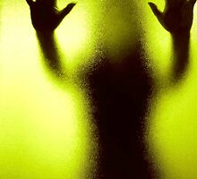 Chrysalis by Shannon McDonald