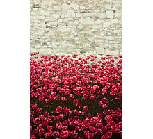 Tower Poppies 04A Photographic Print
