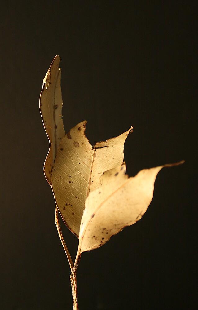 Dried Leaf by Chris Jenkins