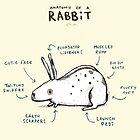 Anatomy of a Rabbit by Sophie Corrigan