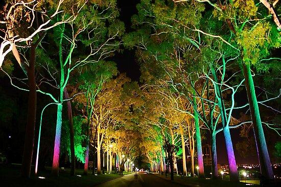 Kings Park - Western Australia  by EOS20