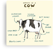 Anatomy of a Cow Canvas Print